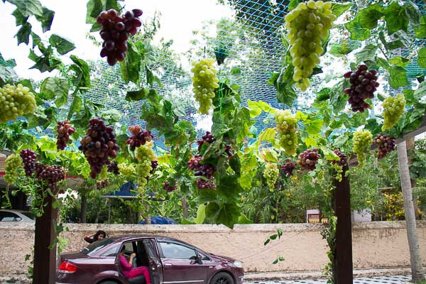 hanging grape vines entrance decor