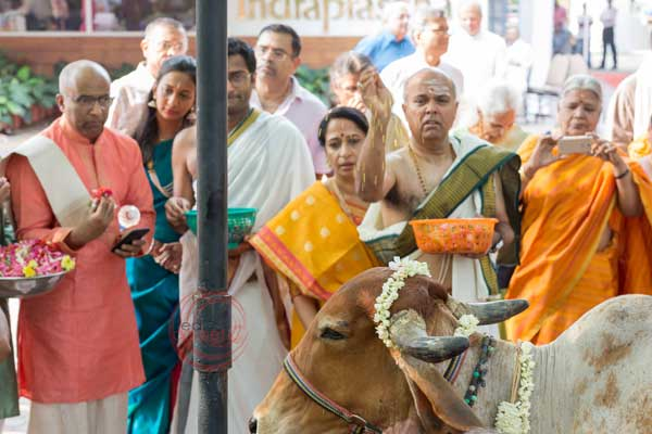 gifting of a cow to a Brahmin gau daan -shashtipoorthi by Red Carpet Events at palakkad coimbatore kerala tamilnadu India Wedding Planning Gallery